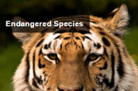 endangered species stack of themed links